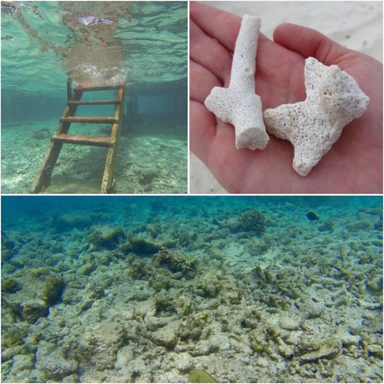 Dead coral