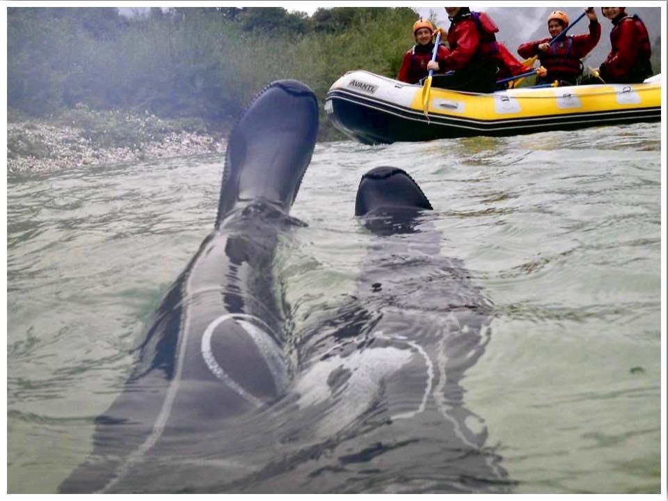 Lake Bled Day Trips White Water Rafting