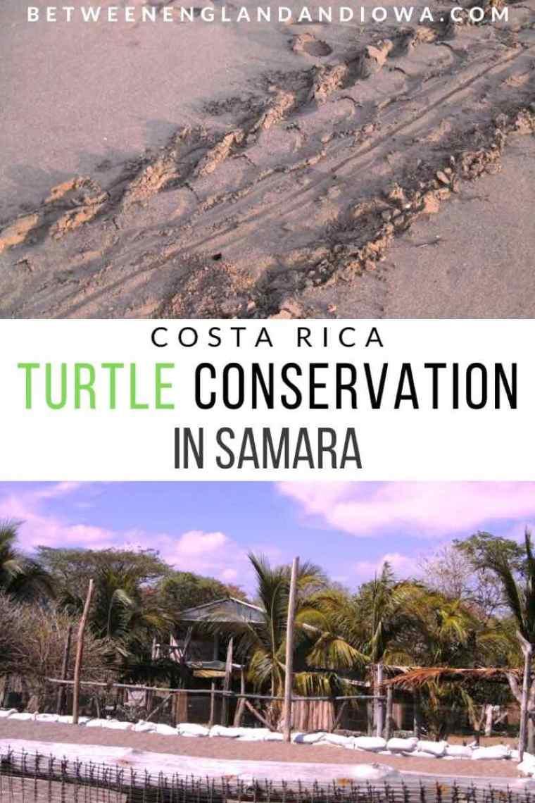 Sea Turtle Conservation in Costa Rica ASVO Samara Playa Buena Vista
