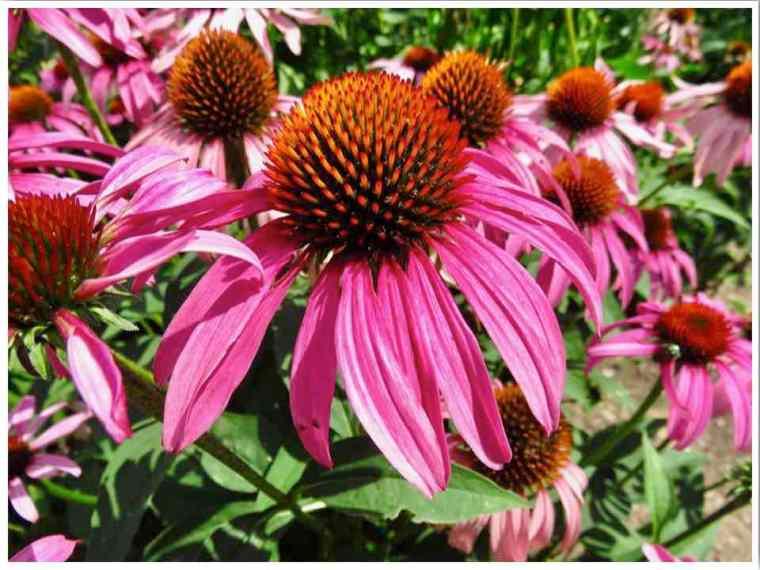 Dubuque Arboretum Botanical Gardens