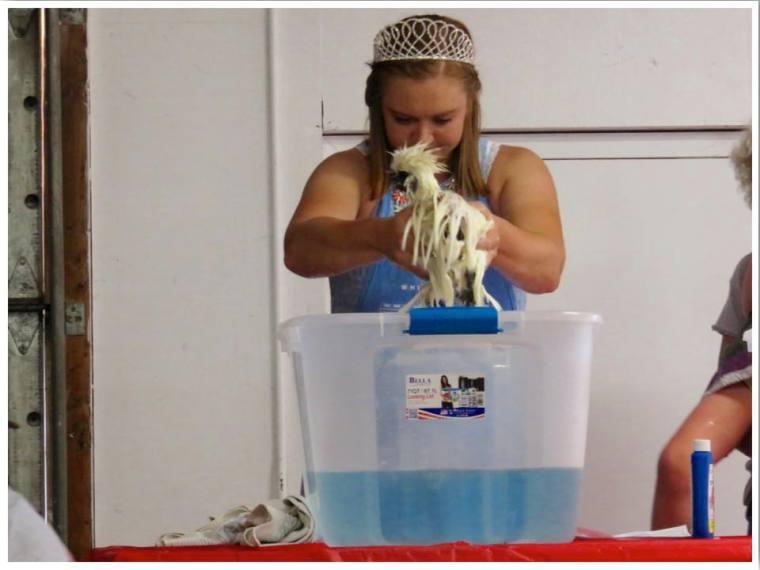 Iowa State Fair Chicken Washing