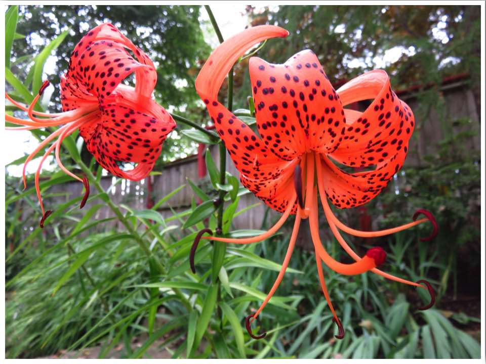 Rotary Botanical Gardens Flowers