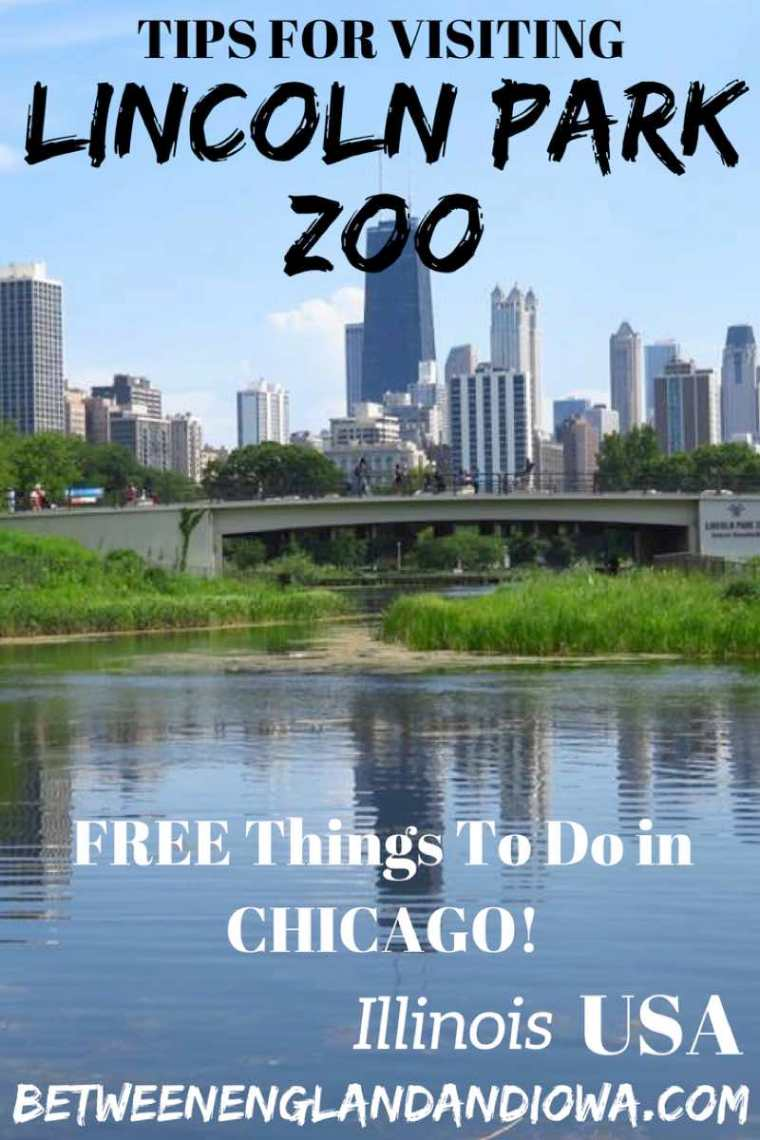 Tips for visiting Lincoln Park Zoo in Chicago. Free things to do in Chicago Illinois