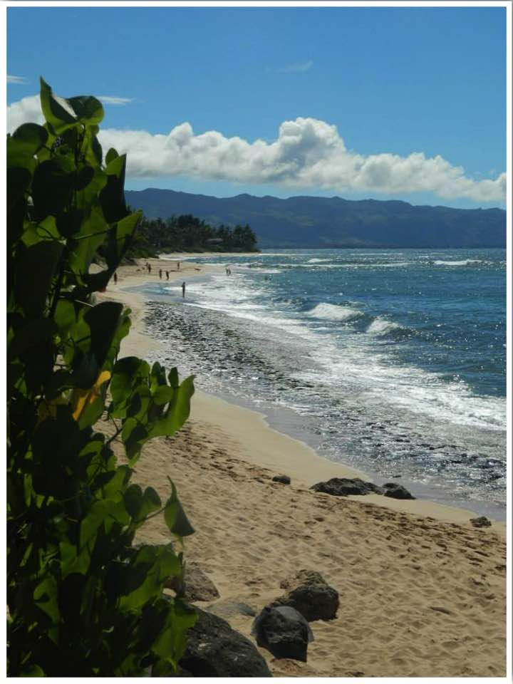 Oahu Beaches Turtle Beach Hawaii USA