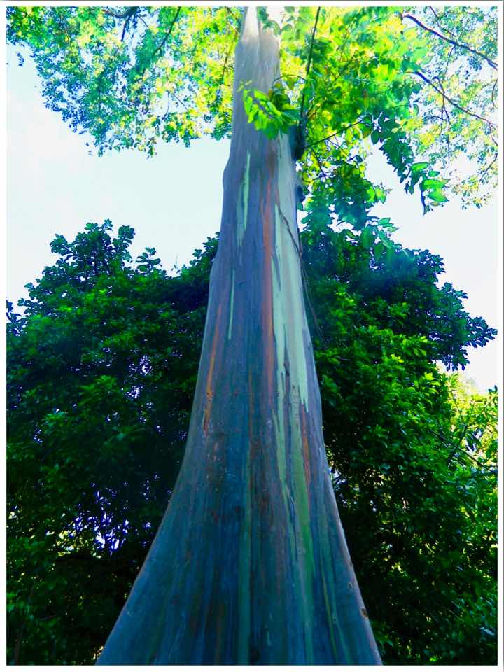 Waimea Valley Botanical Gardens Oahu Hawaii