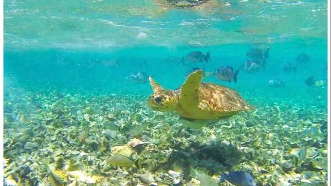 Belize Turtle