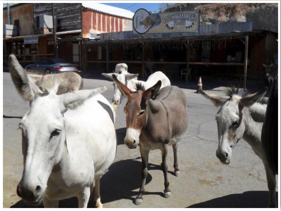 Route 66 Oatman Burros Arizona