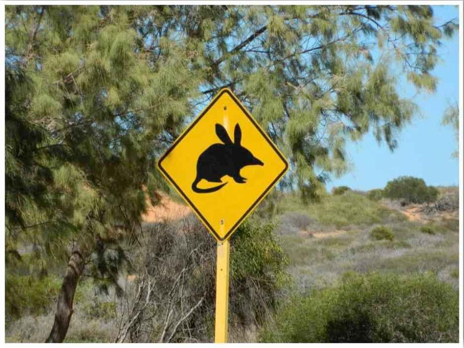 Australia Road Trip