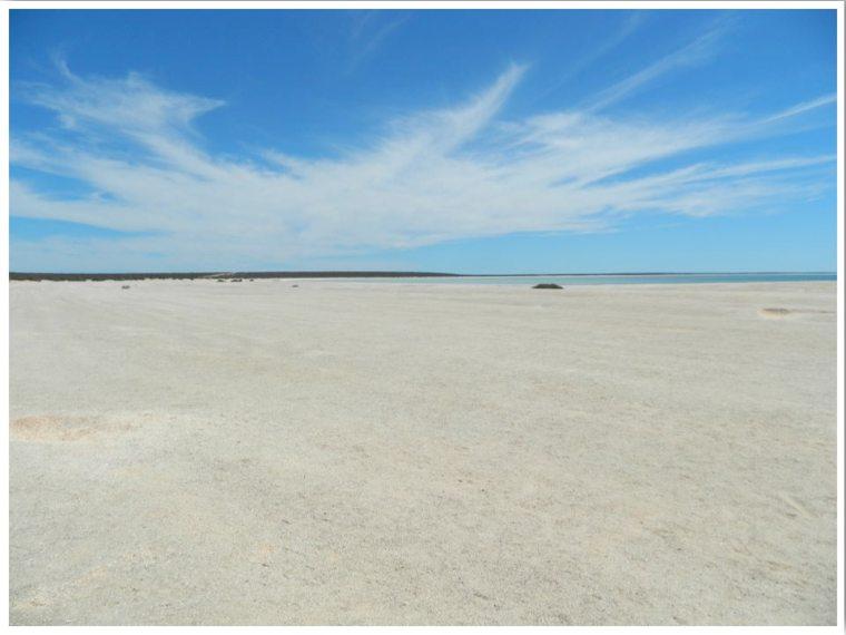 Shell Beach Western Australia