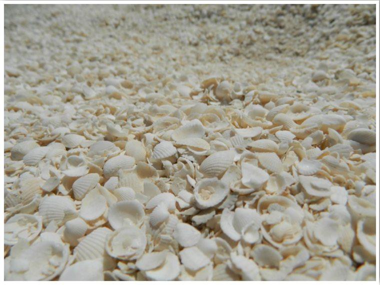 Western Australia Shell Beach