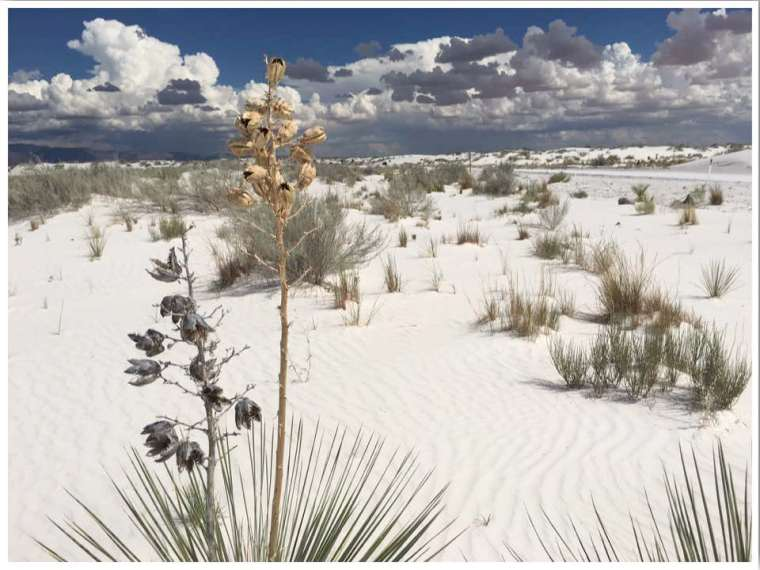 White Sands National Monument TheDownLo