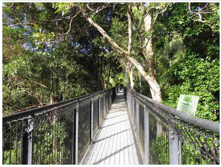 Tamborine Rainforest Skywalk Gold Coast Australia