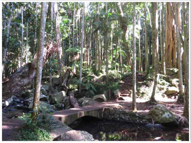 Lower Creek Circuit Mt Tamborine Walks