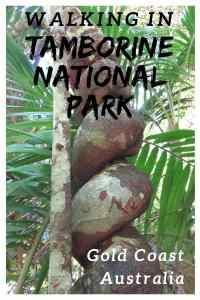 Mt Tamborine Walks. Check out these 2 walking trails you should do in Tamborine National Park in Gold Coast Australia!
