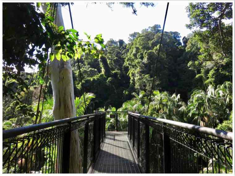 Mt Tamborine Walks Skywalk Queensland