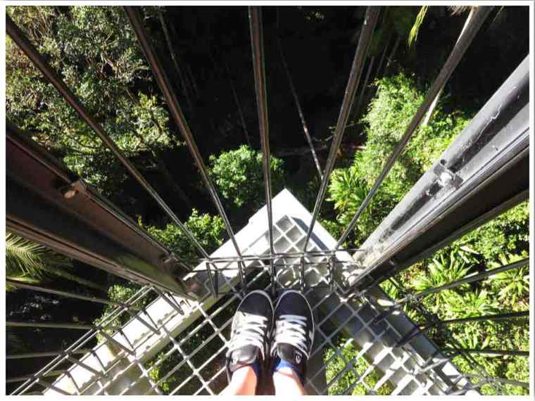 Mt Tamborine Walks Skywalk Gold Coast