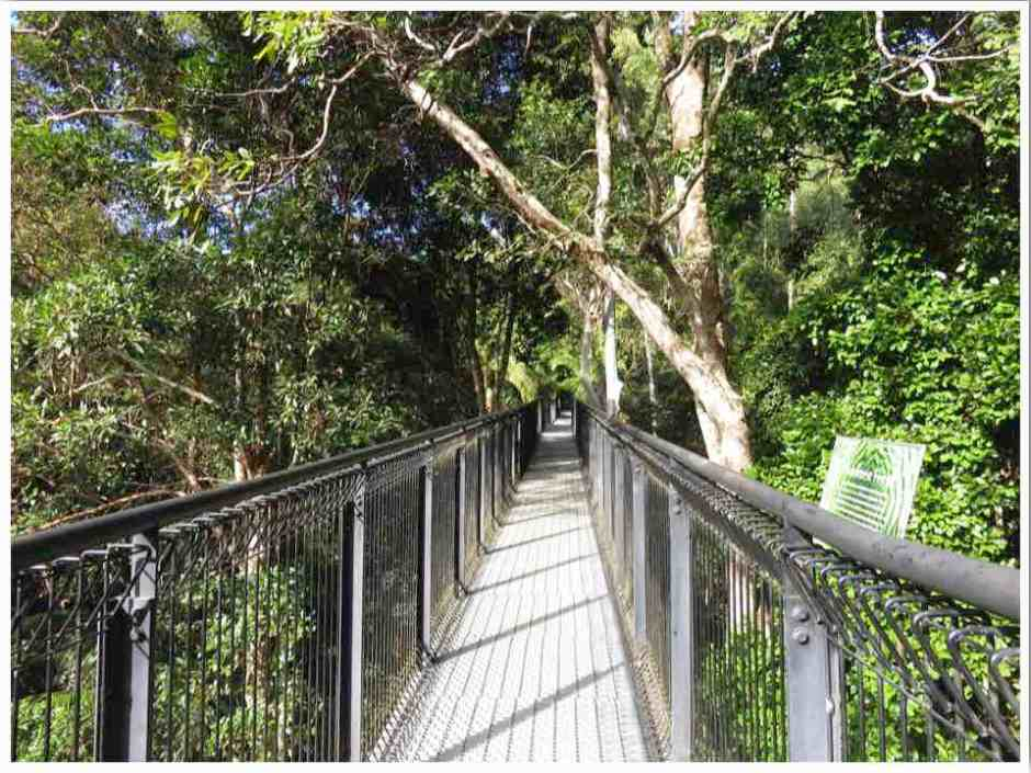 Mt Tamborine Walks Skywalk Gold Coast Australia