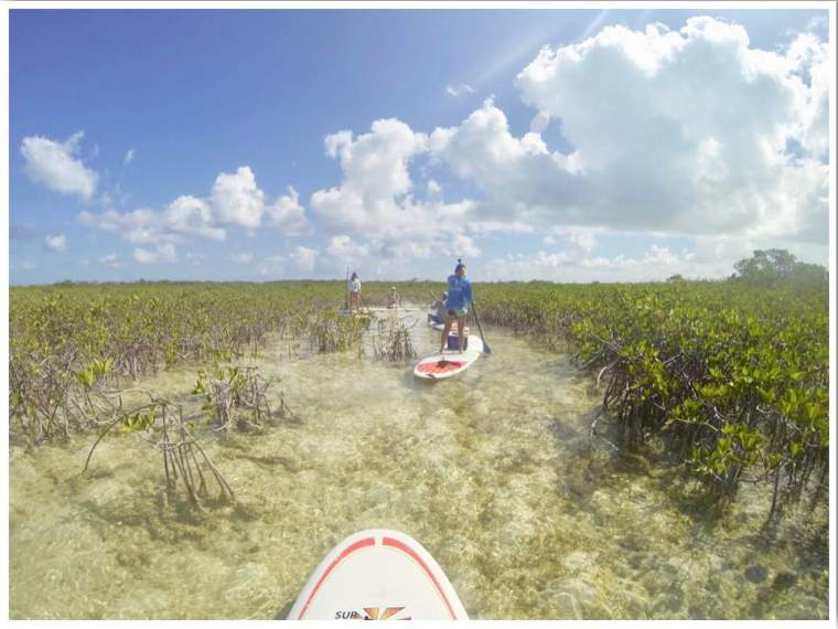 Turks and Caicos Providenciales Things to do SUP Mangrove Cay