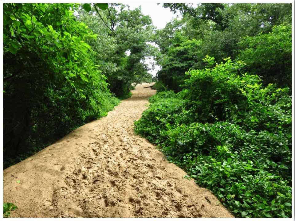Indiana Dunes Hiking 3 Dunes Challenge