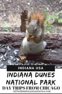 Indiana Dunes National Park USA. Indiana Dunes things to do, an easy day trip from Chicago, just one hour away!