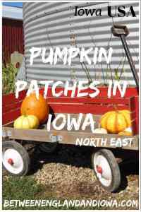 Looking for awesome pumpkin patches in Iowa?! Here are 2 in North East Iowa to check out! Enchanted Acres in Sheffield and Pumpkin Patch Pizzazz in Monticello! USA Midwest travel