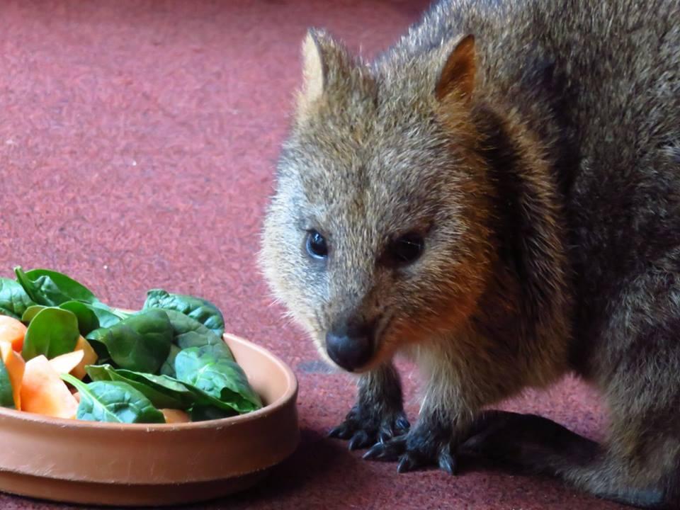 Sydney Wildlife