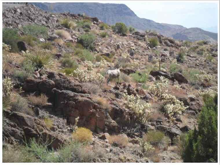Sitgreaves Pass Arizona Black Mountains