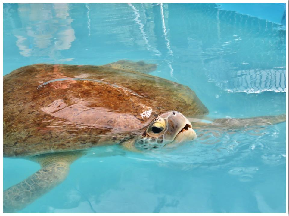 turtle hospital marathon coupons