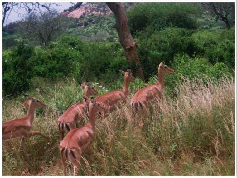 Tsavo Safari Kenya