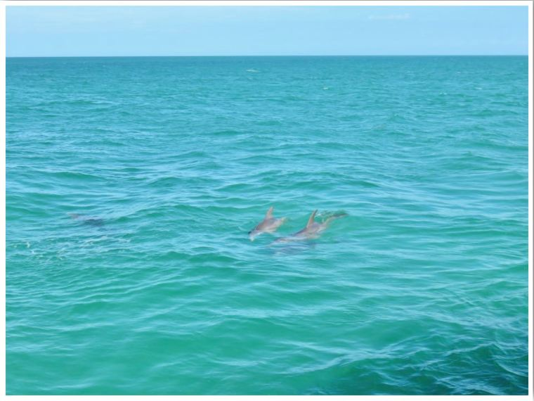 Dolphins in Key West Florida