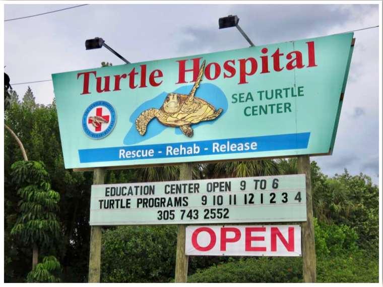 The Turtle Hospital Sea Turtle Center Marathon
