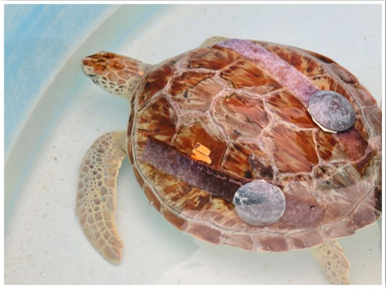The Florida Keys Turtle Hospital Marathon