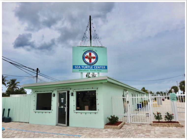 The Turtle Hospital Marathon Florida Keys