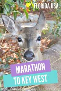 Marathon Florida to Key West