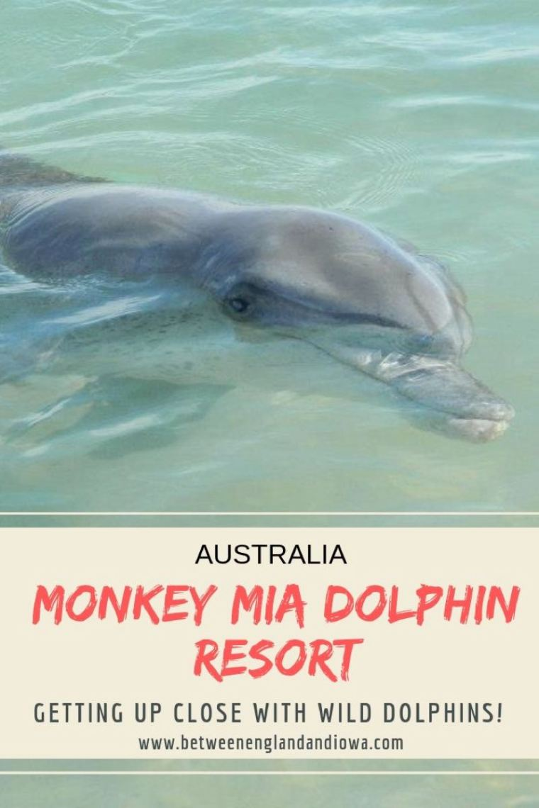 Getting up close with wild dolphins at the Monkey Mia Resort in Western Australia!