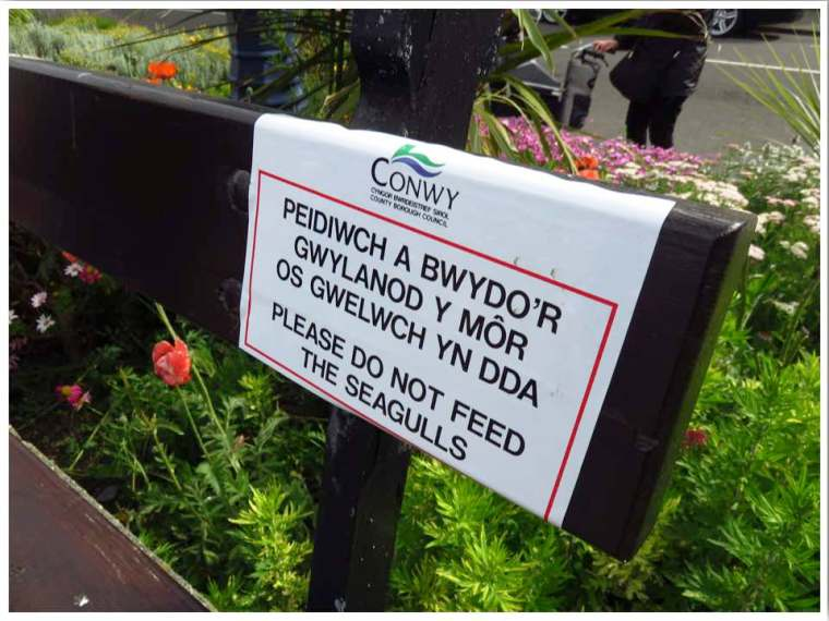 Wales seagull sign