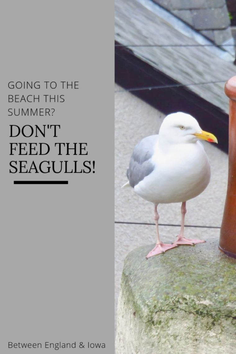 Why you shouldn't feed seagulls at the beach