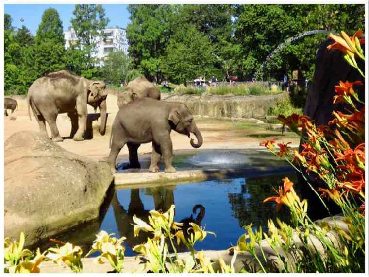 Kölner Zoo Germany